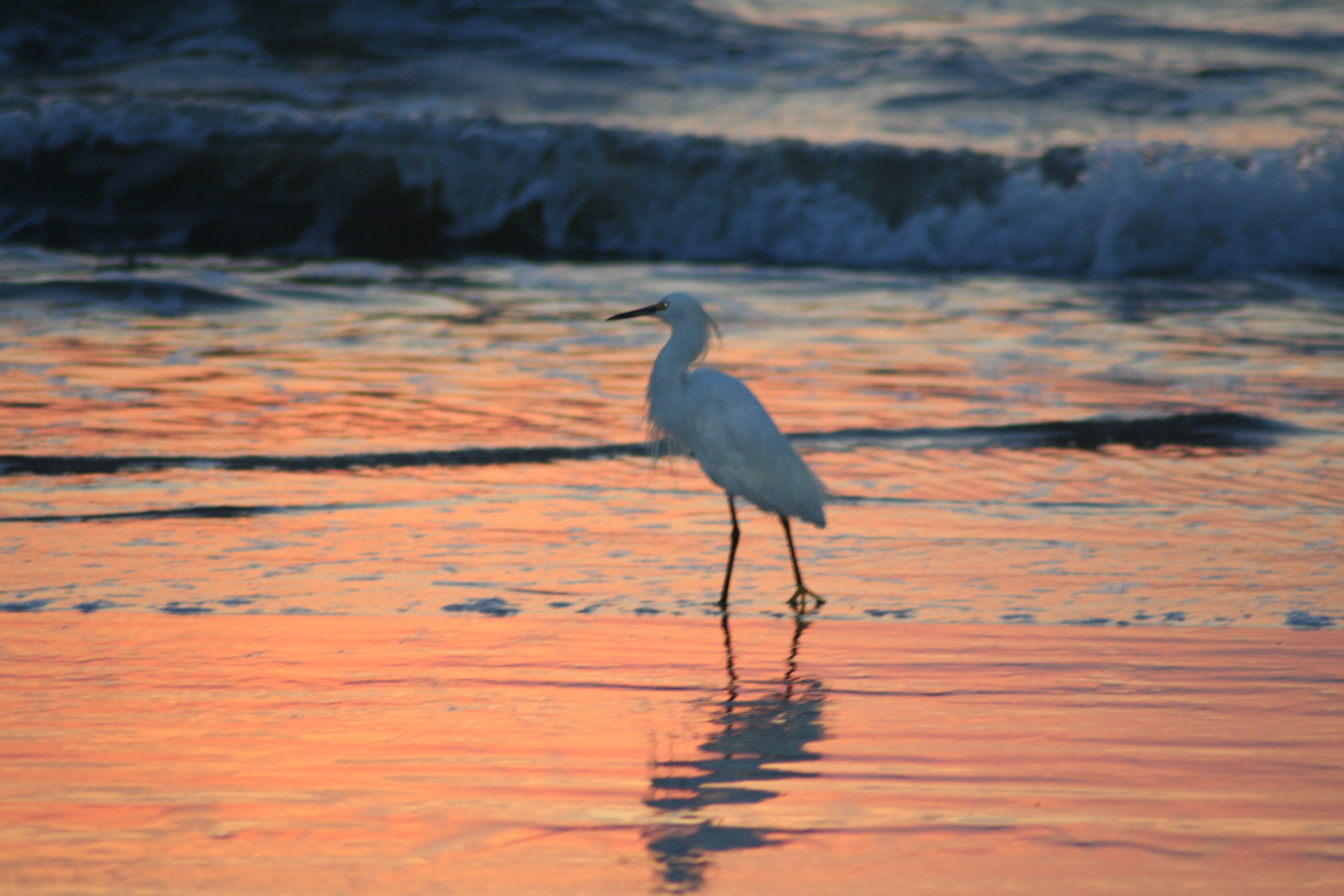 Morning Vespers The Skinny Island Post